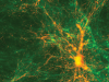 Share Your Science: Simulating Reionization of the Universe – Witnessing Our Own Cosmic Dawn
