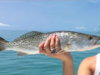 App Helps Fishermen Instantly ID Their Catch