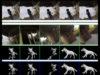Researchers Train AI to Think Like a Dog