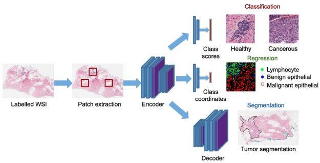 Application work-flow in the digital pathology