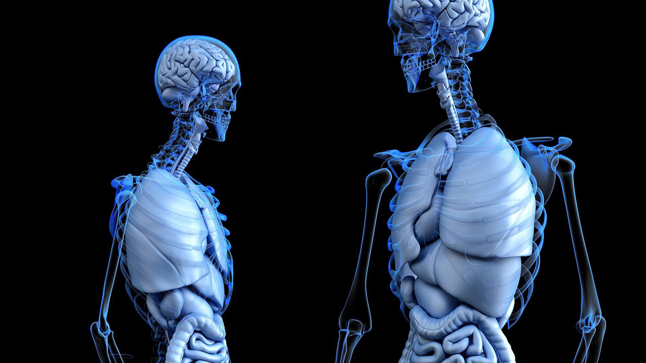 A 3D visualization of the human body.