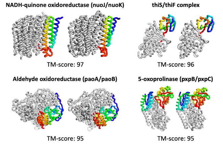 Illustration of predicted protein structures